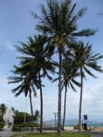 Nha Trang – Der Strandort Vietnams