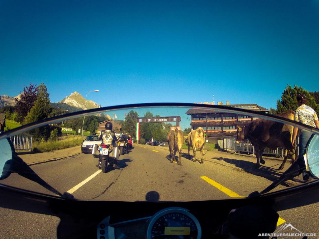 Nichts Besonderes in der Schweiz - Stau wegen einer Kuhherde