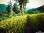 Dschungel-Trekking in Chiang-Mai