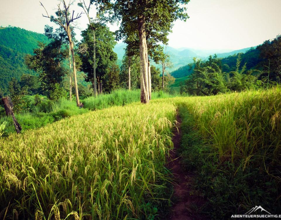 Unser Weg führte uns durch von Hand bepflanzte Reisfelder
